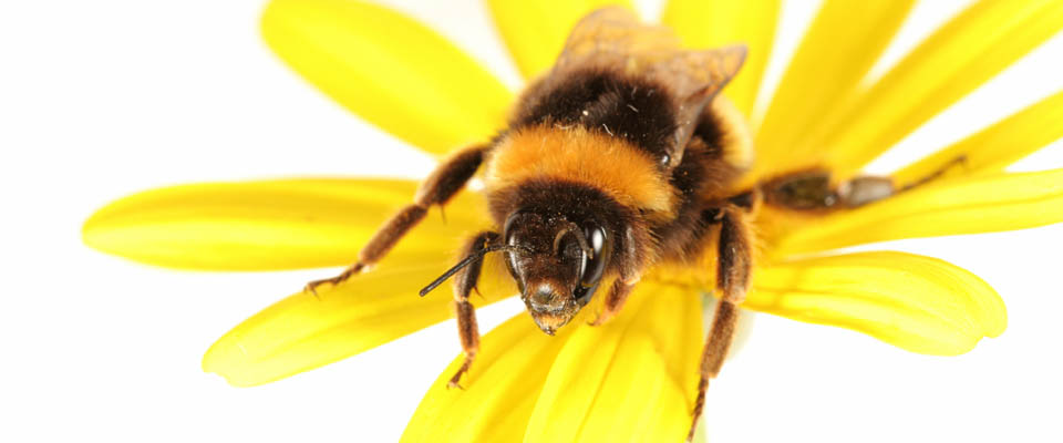 Consider the Honeybee When Attracting Your Social Customers